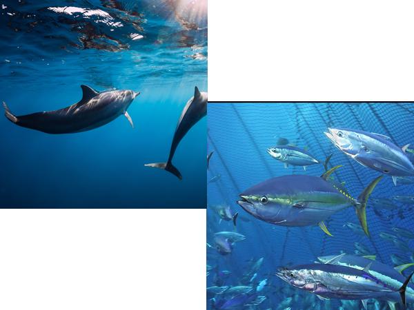 La flore et la faune aquatique/marine